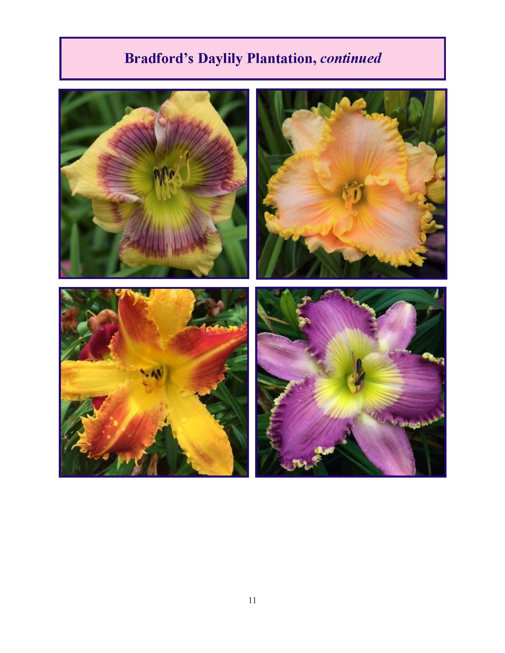 June 2017 Gardengoer_Page_11.jpg