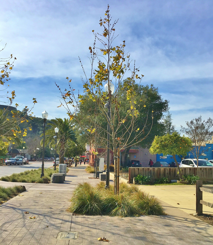 Full Service Landscape Design