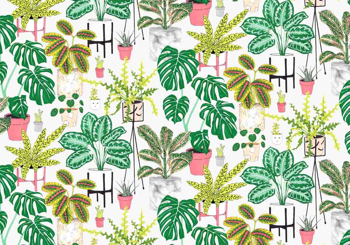 Houseplants2.jpg