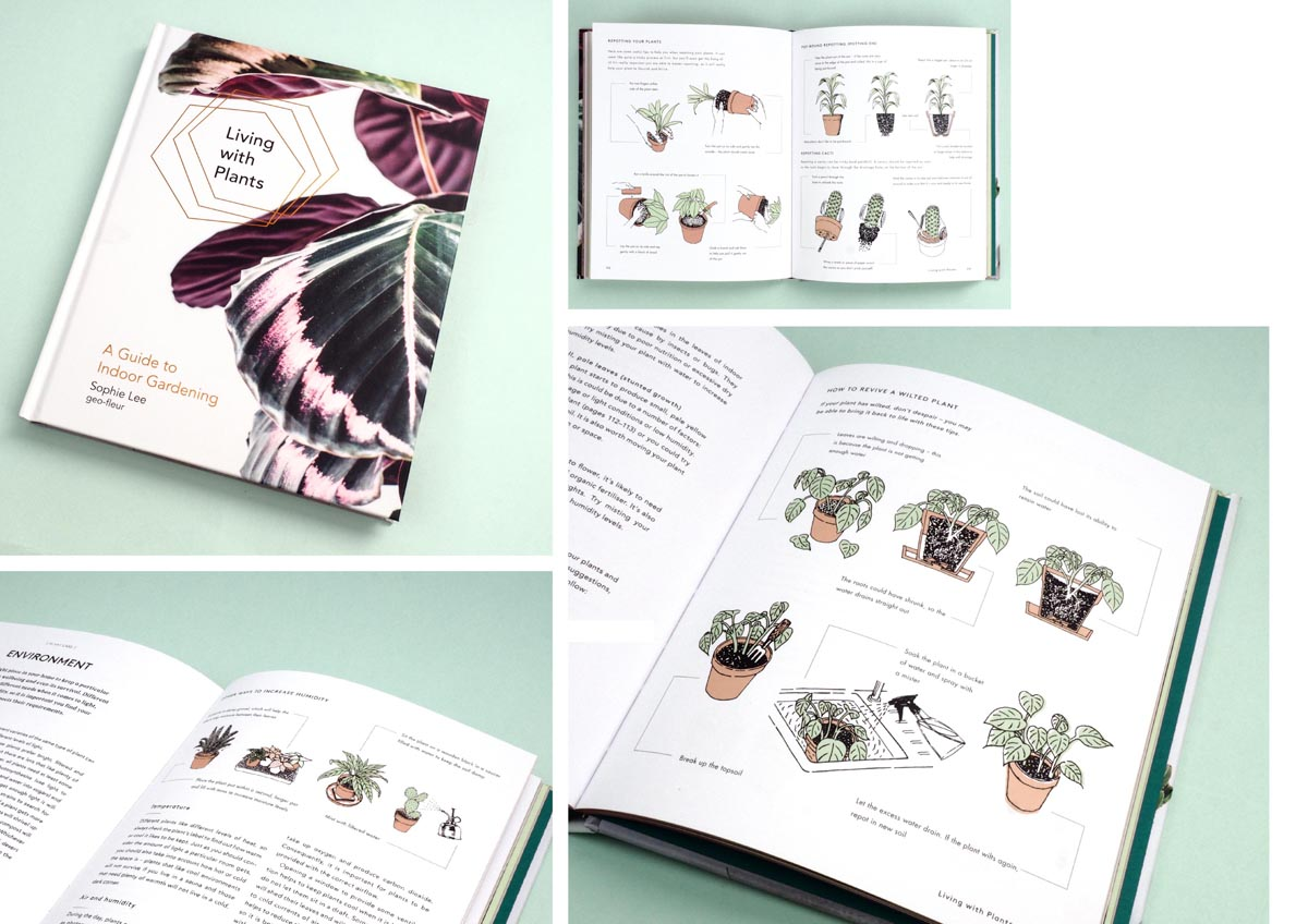 Living-with-Plants-Book-Illustrations-1.jpg