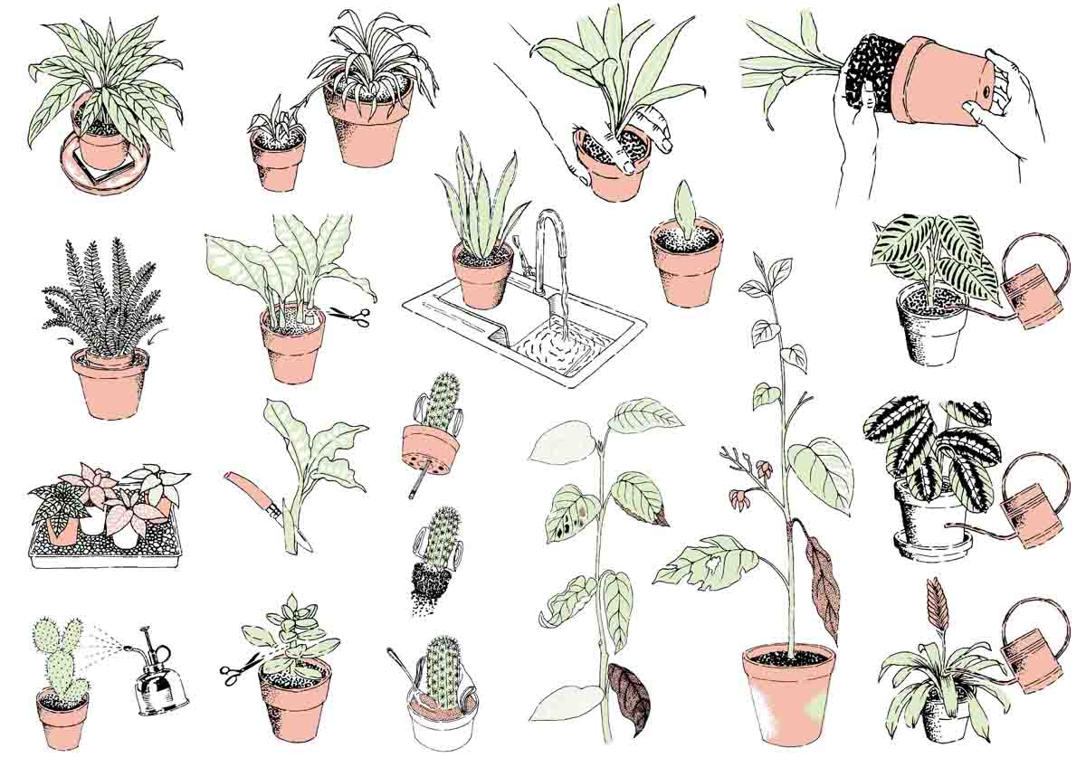 Living-with-Plants-Book-Illustrations-web.jpg