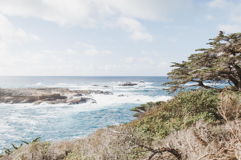 Point Lobos - Jan 2019 - online-1.jpg