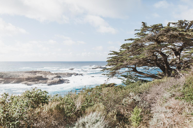 Point Lobos - Jan 2019 - online-2.jpg