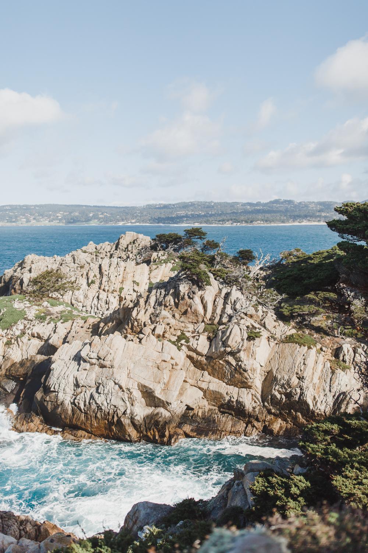 Point Lobos - Jan 2019 - online-12.jpg