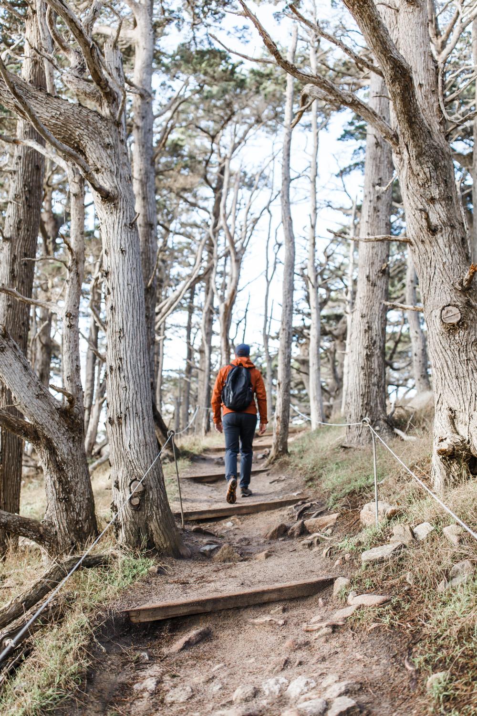 Point Lobos - Jan 2019 - online-3.jpg