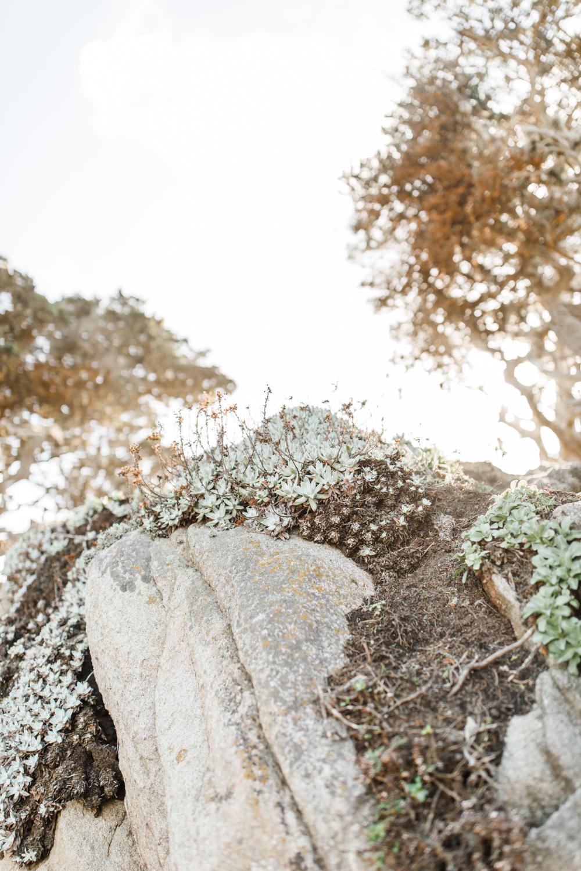 Point Lobos - Jan 2019 - online-18.jpg