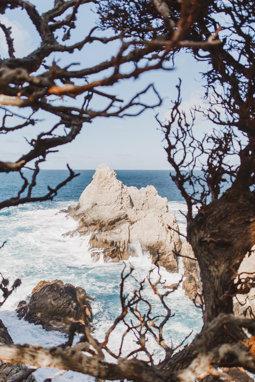 Point Lobos - Jan 2019 - online-20.jpg