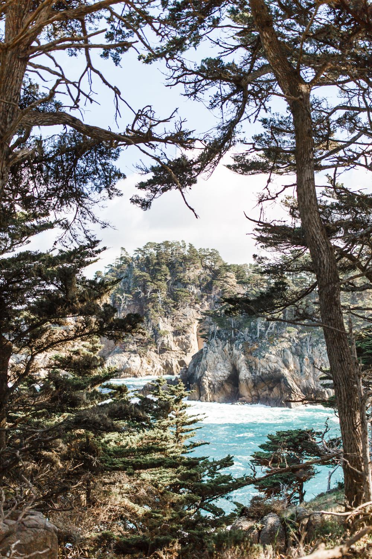 Point Lobos - Jan 2019 - online-22.jpg