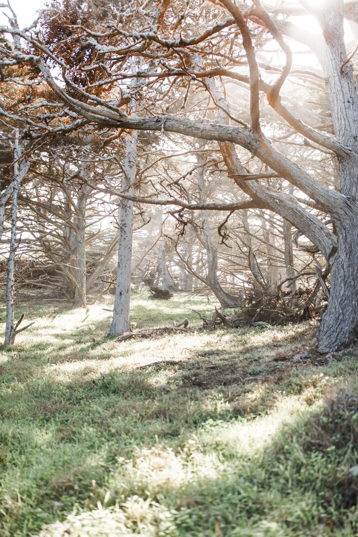 Point Lobos - Jan 2019 - online-21.jpg