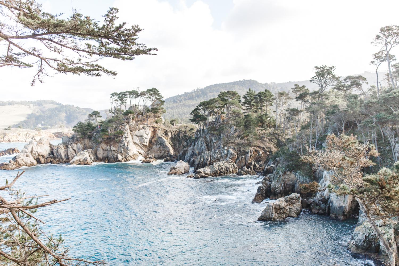 Point Lobos - Jan 2019 - online-33.jpg