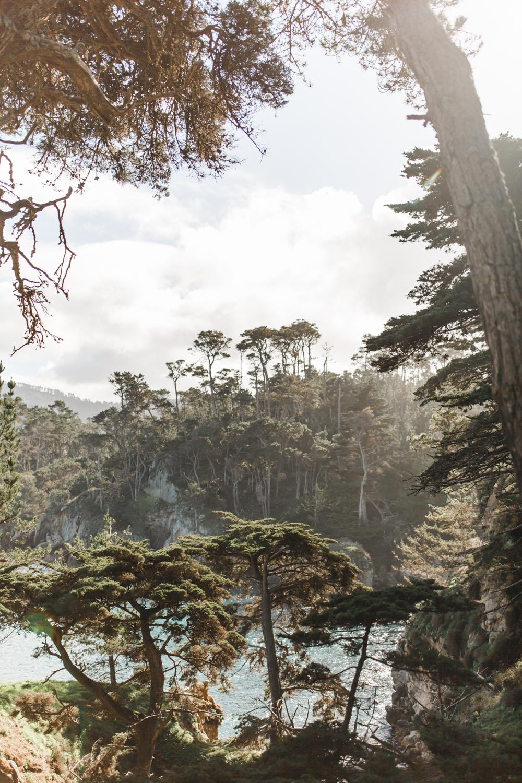Point Lobos - Jan 2019 - online-31.jpg