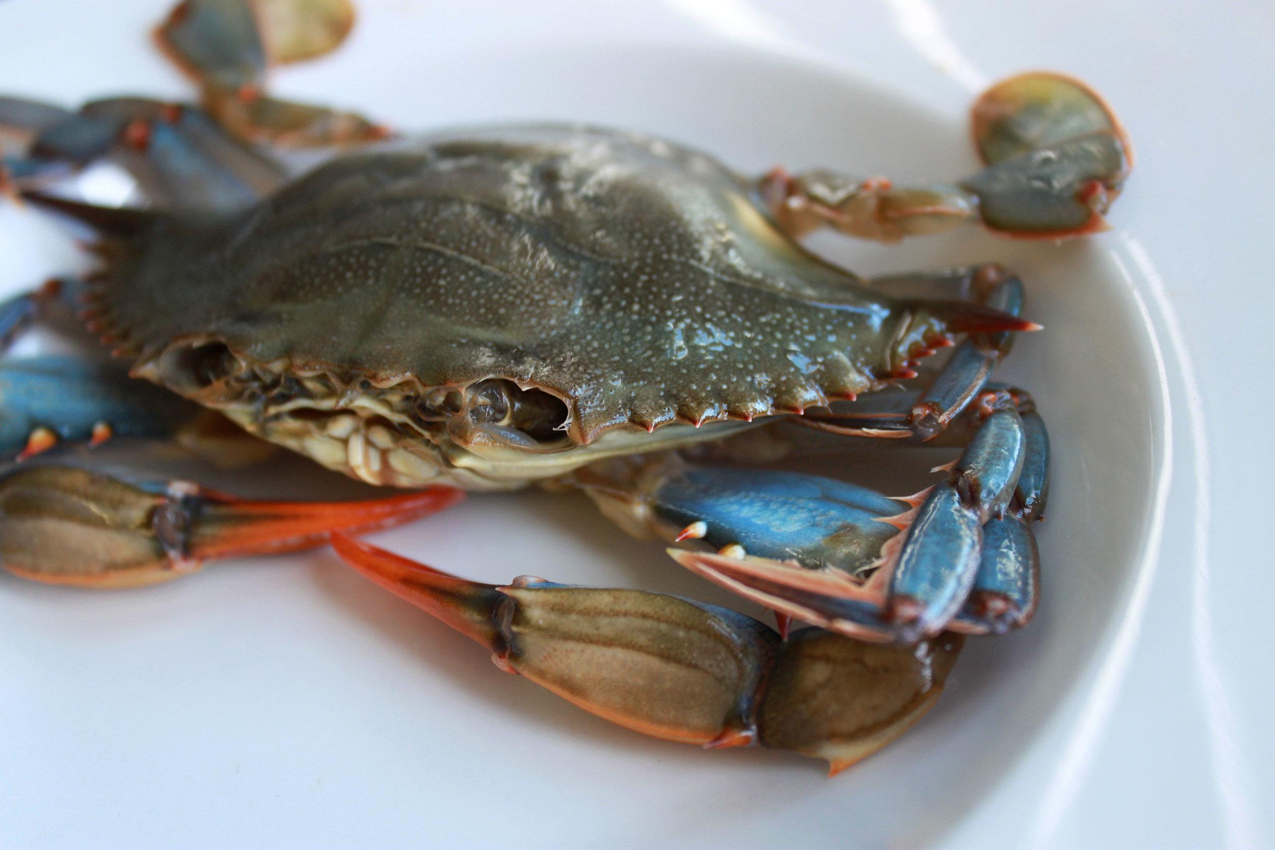 softshell-crab.jpg