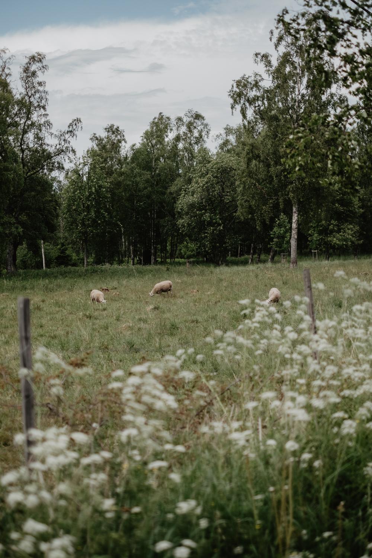 Norrbyskär-22.jpg