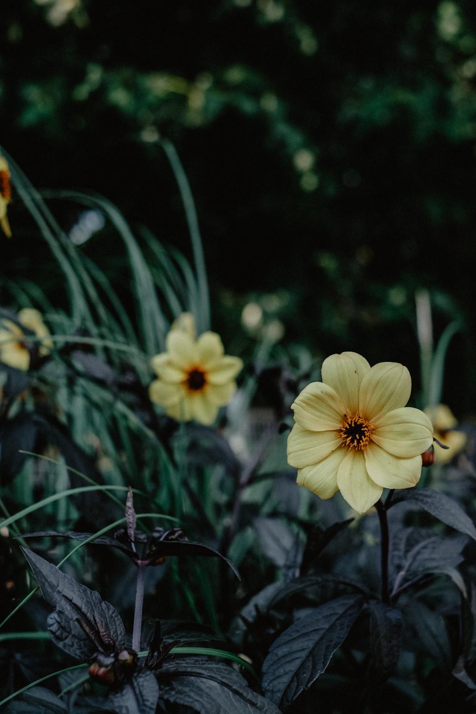vinterträdgården-12.jpg