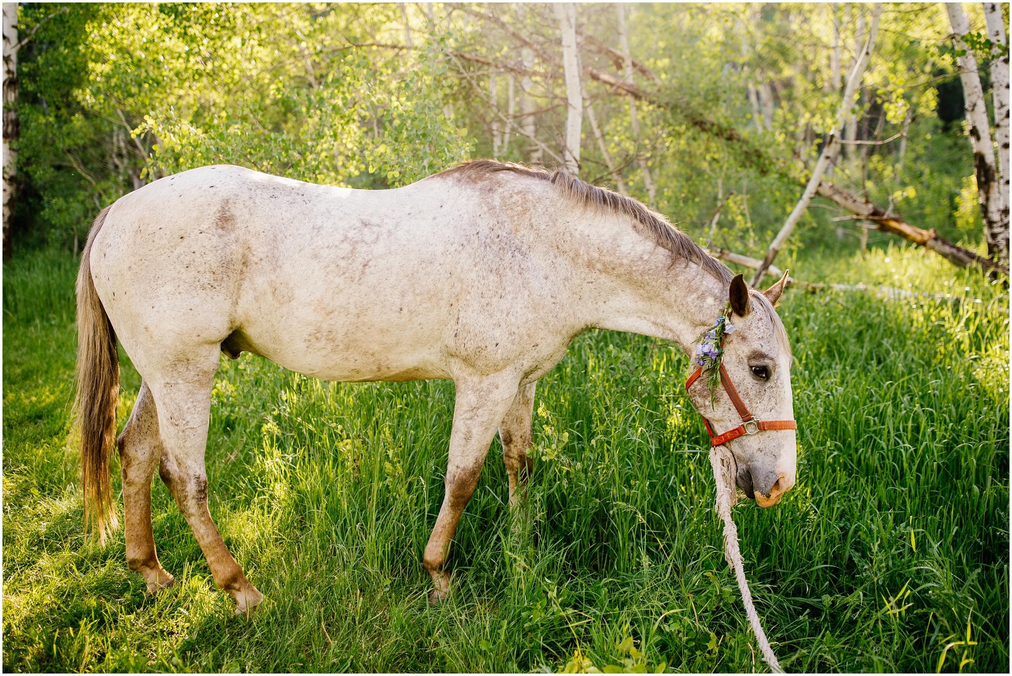 TreeHorseShoot-54_Lizzie-B-Imagery-Utah-Wedding-Photographer-Salt-Lake-City-Park-City-Oakley.jpg