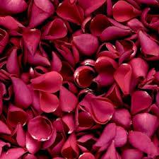 rosepetals.jpeg
