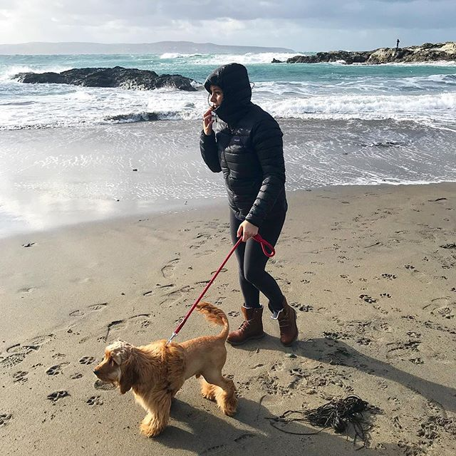 We had to wrap up warm today down on Godrevy Beach. Even Bails put on his fur coat, forgot his pants tho 🙄. The northerly winds got us pretty freezey so we headed into St Ives for a Sunday roast and a bottle of red. What better way to end a week of vegan experimentation with a slice of crispy pork belly and cheese loaded veggies. Life's been pretty busy lately but it was nice to hang with the hubby and roam around cornwall searching for beaches and good food.👌🏼—— #cornwall #kernow #godrevylighthouse #godrevy #cockerspaniel #englishcockerspaniel