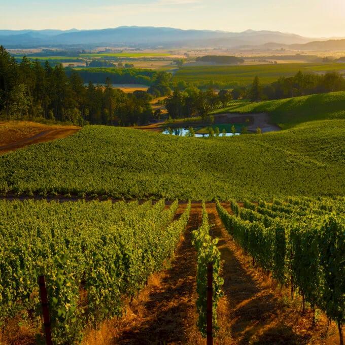 Eola Hills Vineyard - Eola-Amity Hills AVA, Oregon.