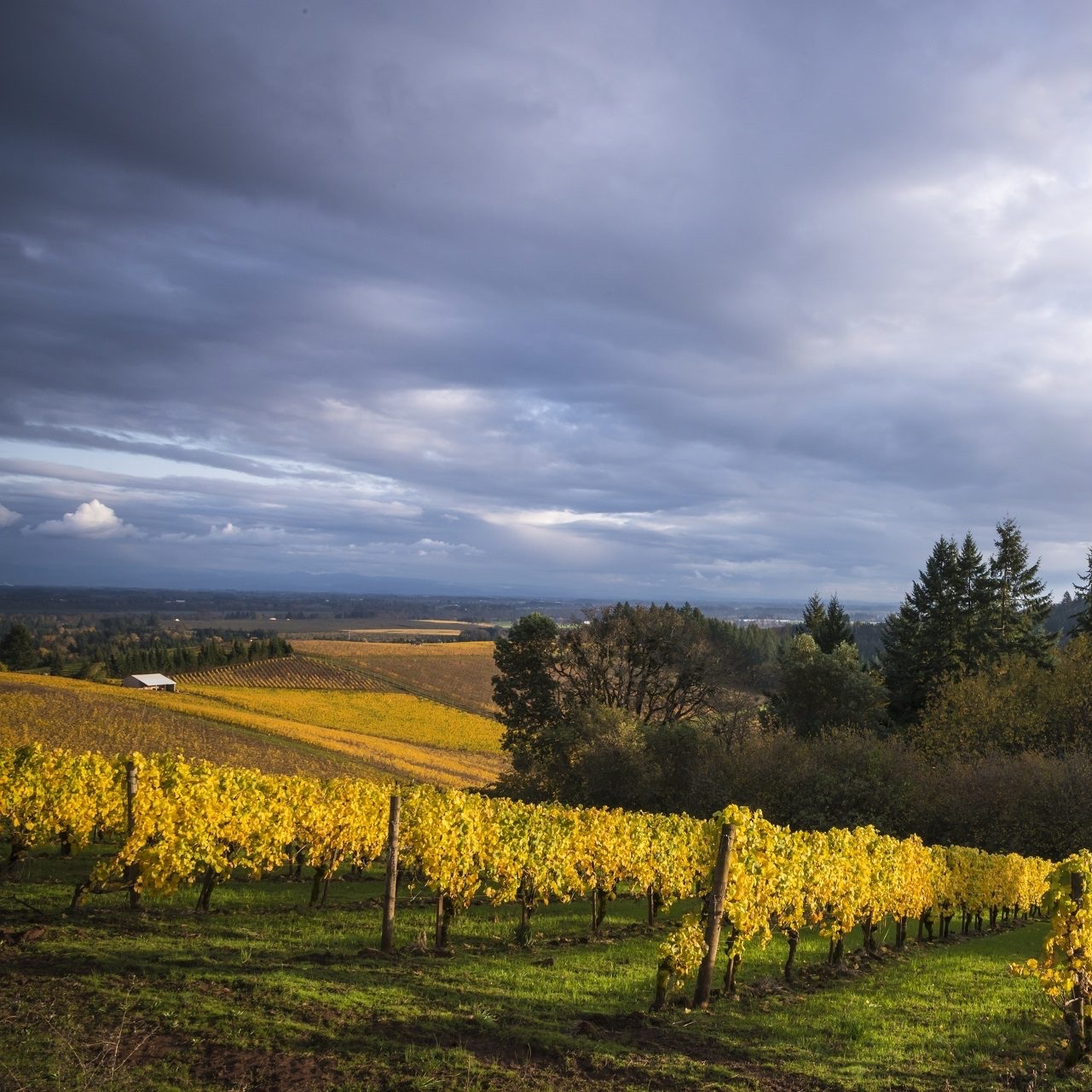 Domaine Loubejac Vineyard - Willamette Valley AVA, Oregon.