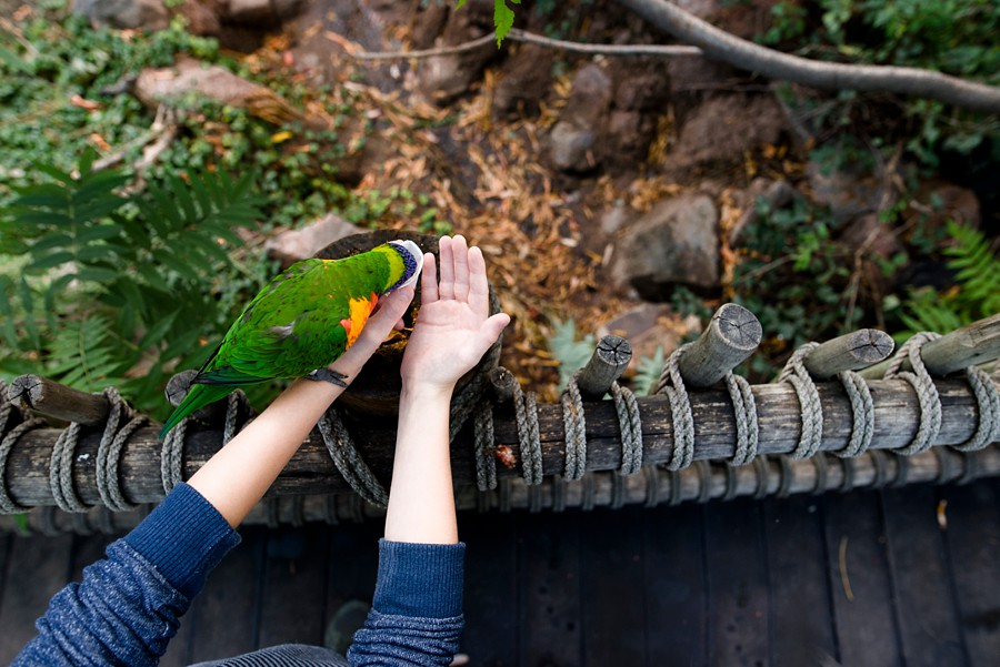 A boy lets a colorful bird eat nectar from his hand at an exhibit at the Denver Zoo. With Kristiina Craven Photography
