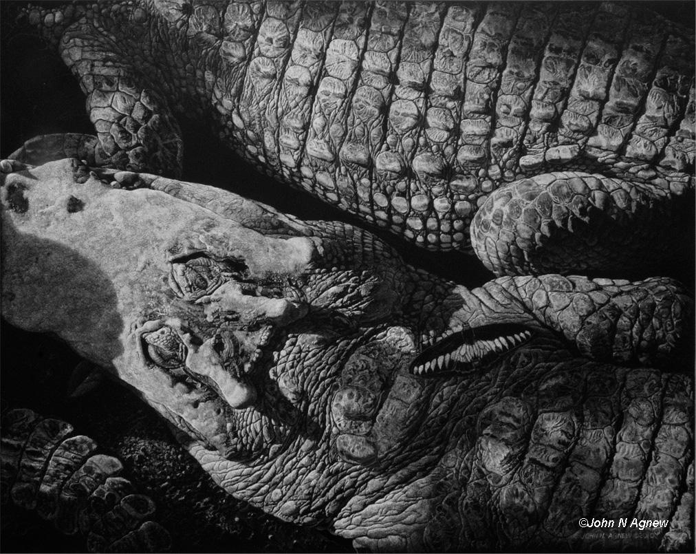 Crocodile Dreams_72.jpg