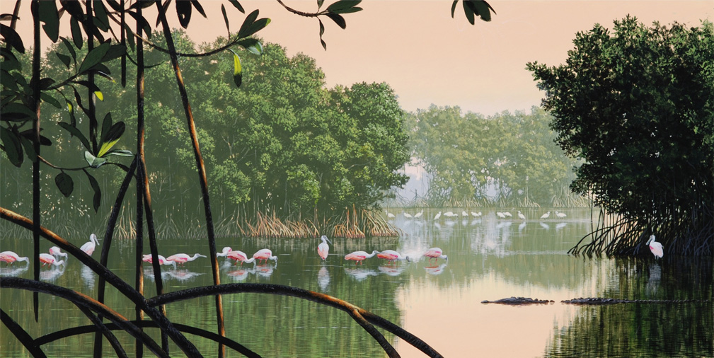 Mangrove Morning (with crocodile)_72.jpg