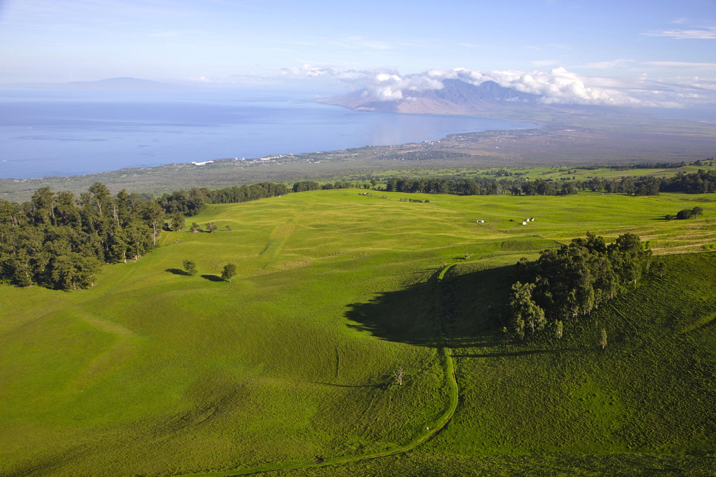 Ulupalakua-Ranch-pastures.jpg