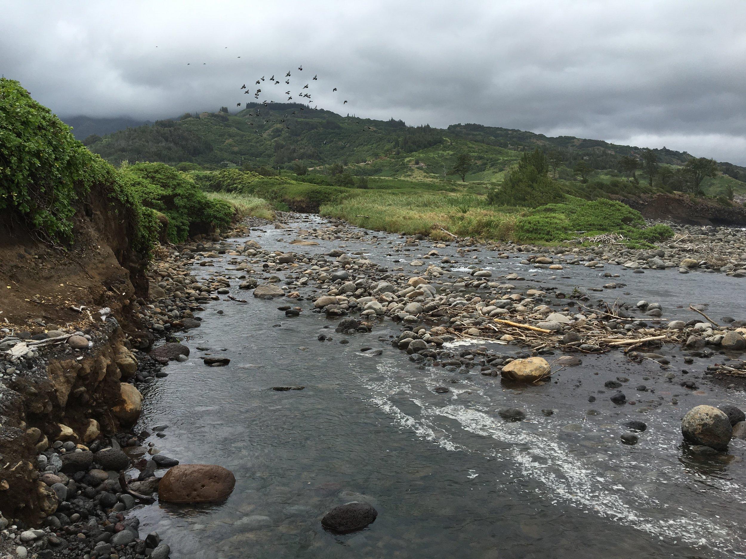 Waihe'e Stream - Part of  Na Wai 'Eha (The Four Streams)