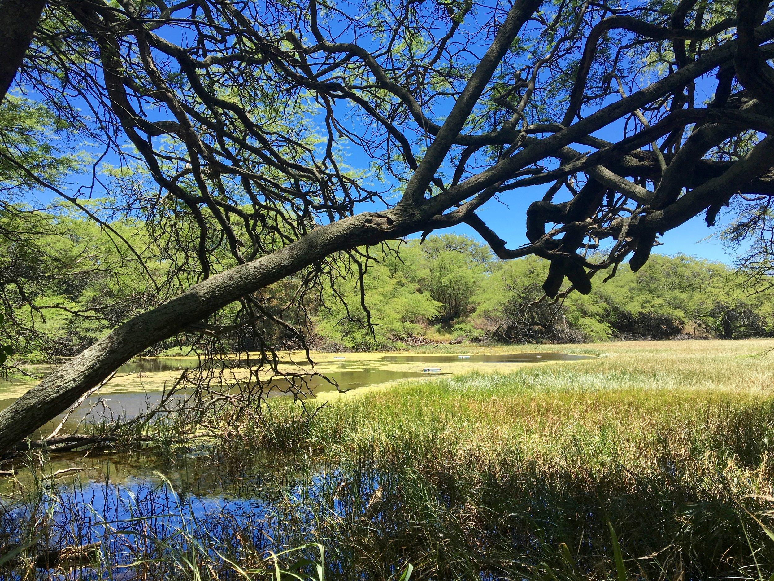 Nu'u Wetlands