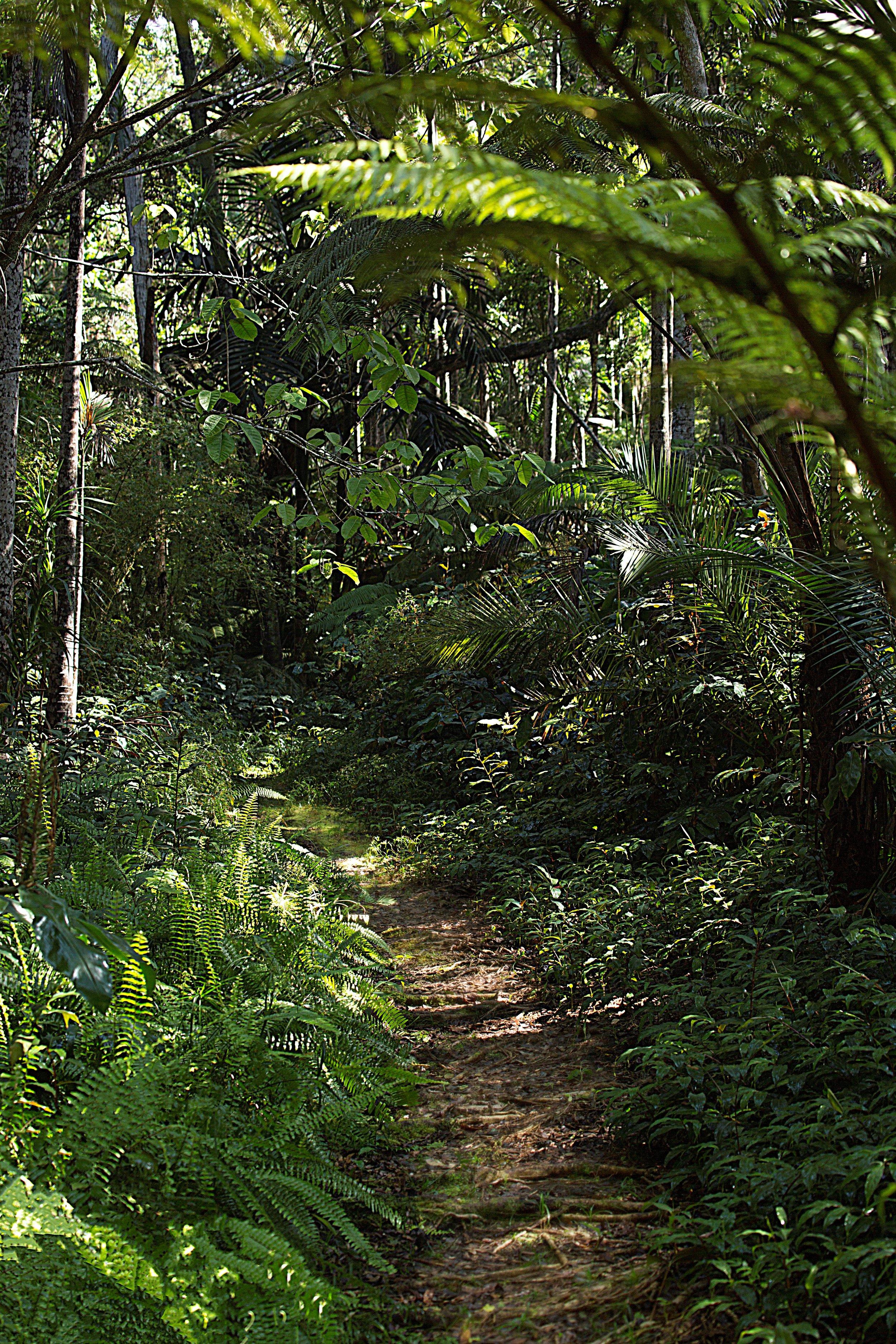 Kona Cloud Forest. Photo Courtesy of Kelly Dunn