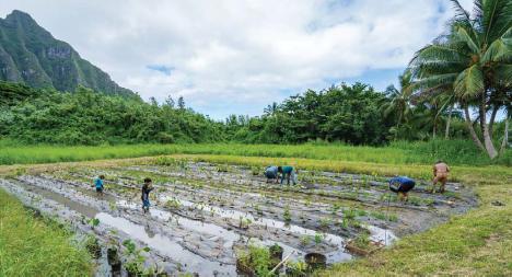 Hakipuu Loi - Photo Courtesy of Trust for Public Land
