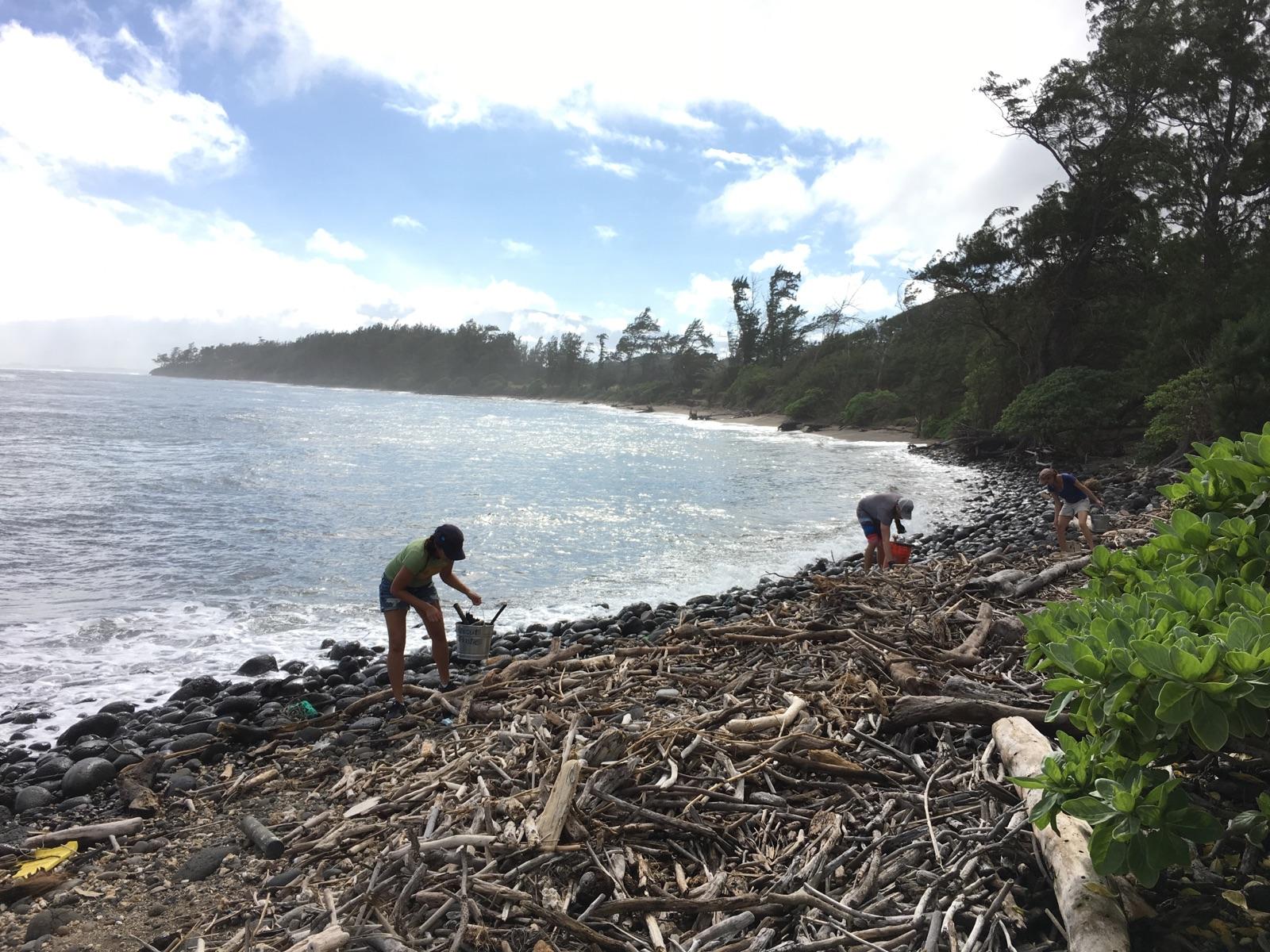 Skyline Eco-Adventures Beach Clean Up at Waihee