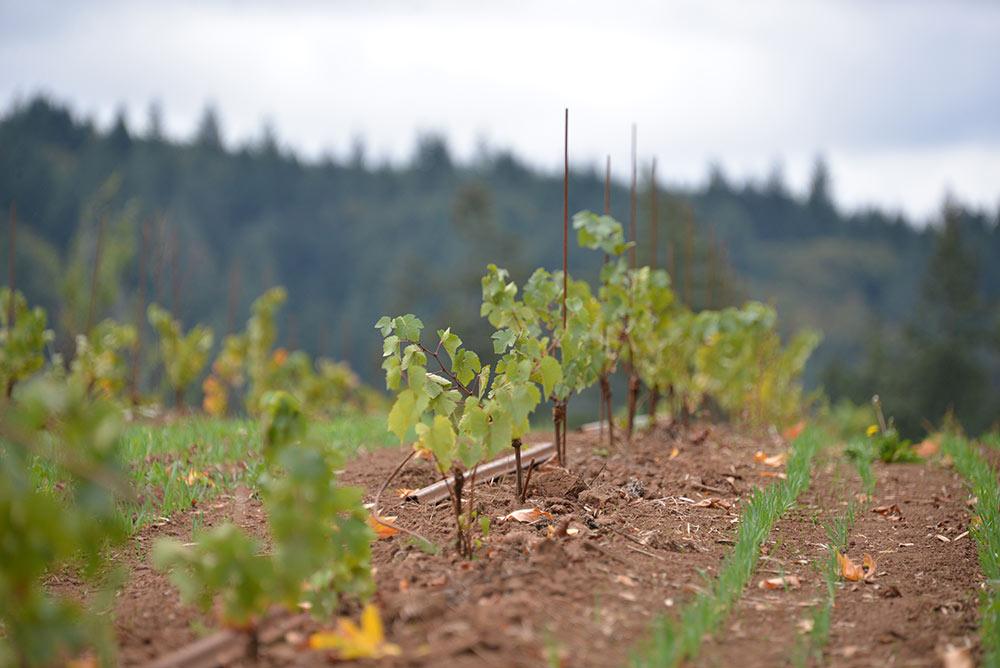 Vineyard-Thumb-2.jpg