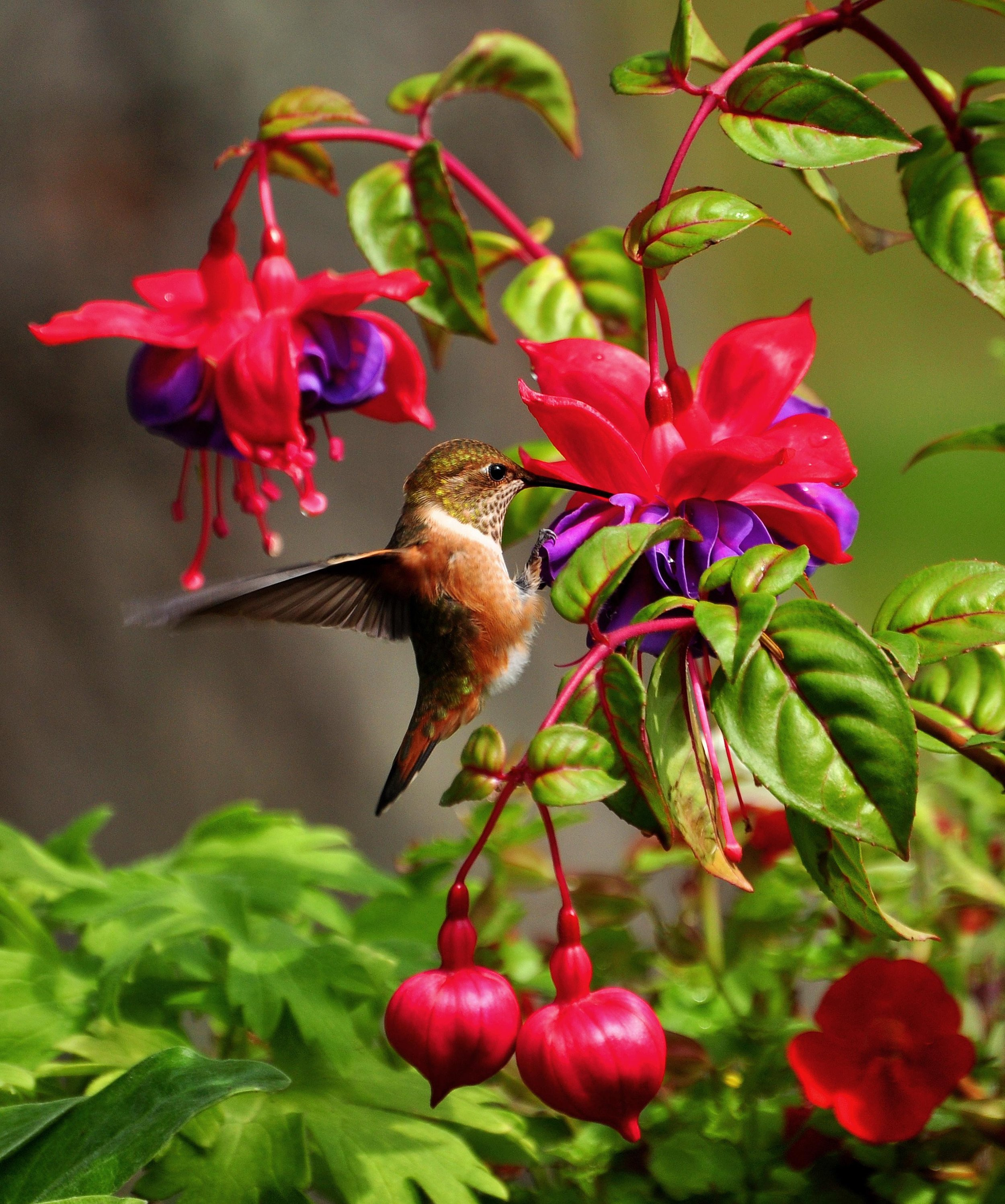 Laying out the welcome mat for hummingbirds is easier than you may think. Set your backyard abuzz with excitement this summer with these 7 hummingbird-happy secrets! Read more —-> http://www.happyhearthappyhome.com/blog/welcome-hummingbirds-home