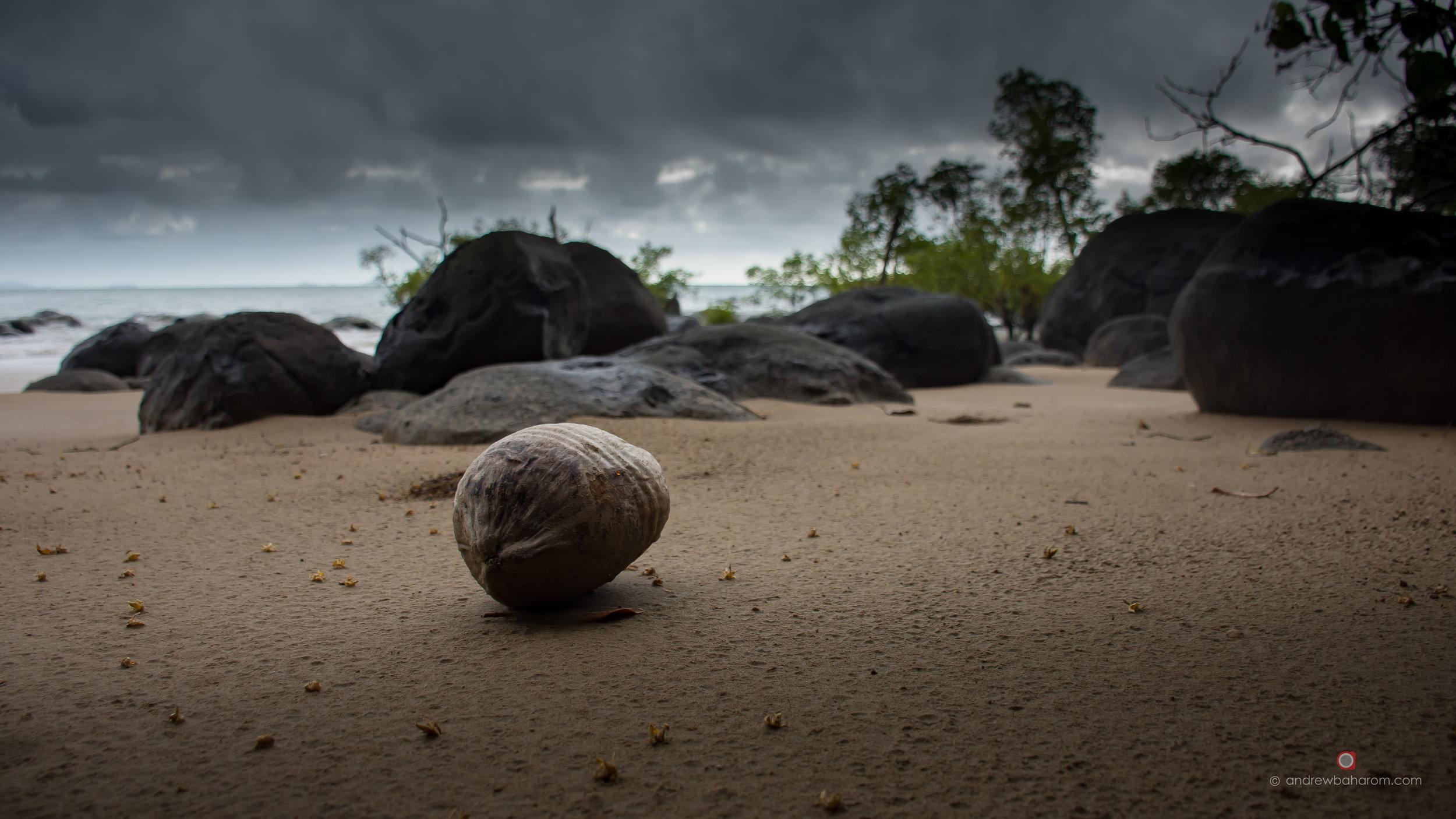 Mission Beach Coconut.jpg