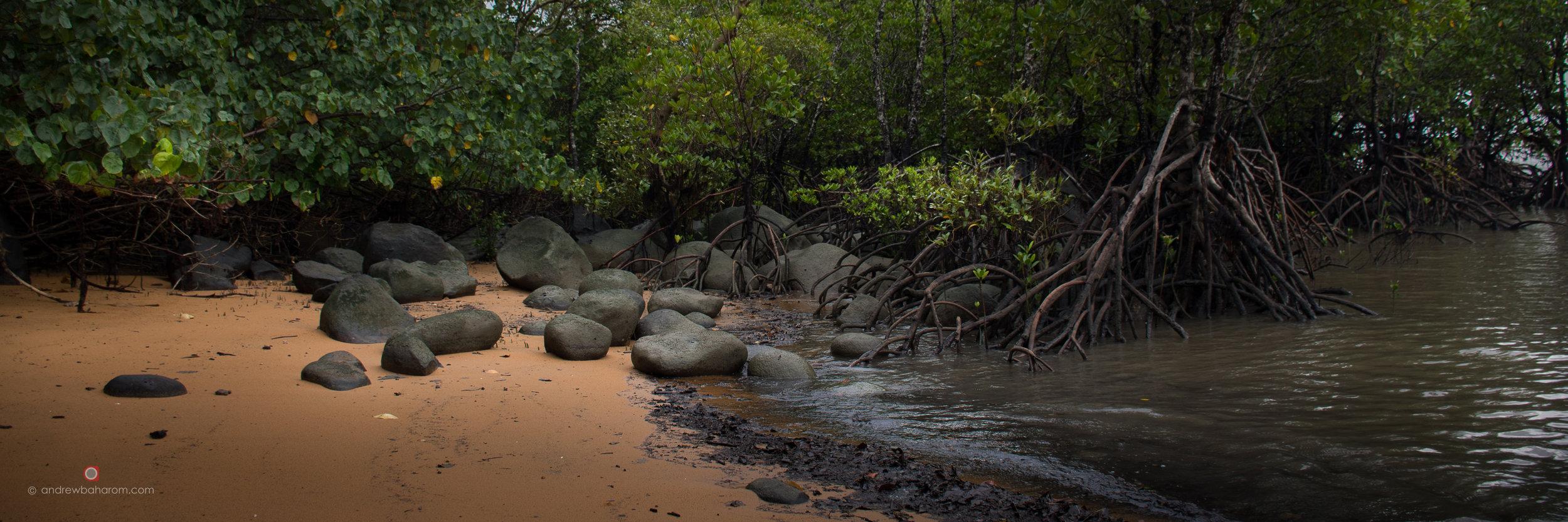 Mission Beach Mangrove.jpg