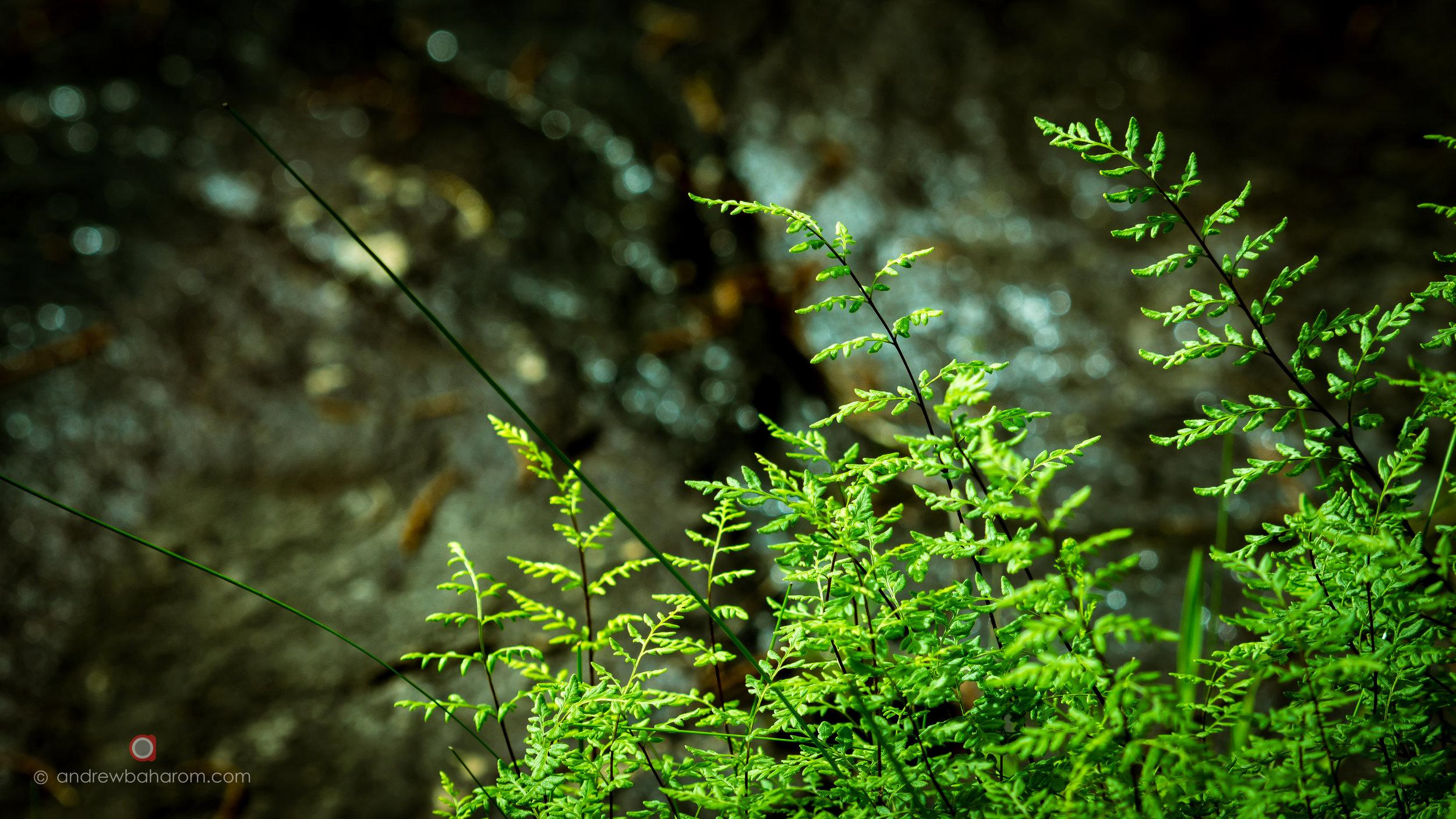 Bickley Plant.jpg