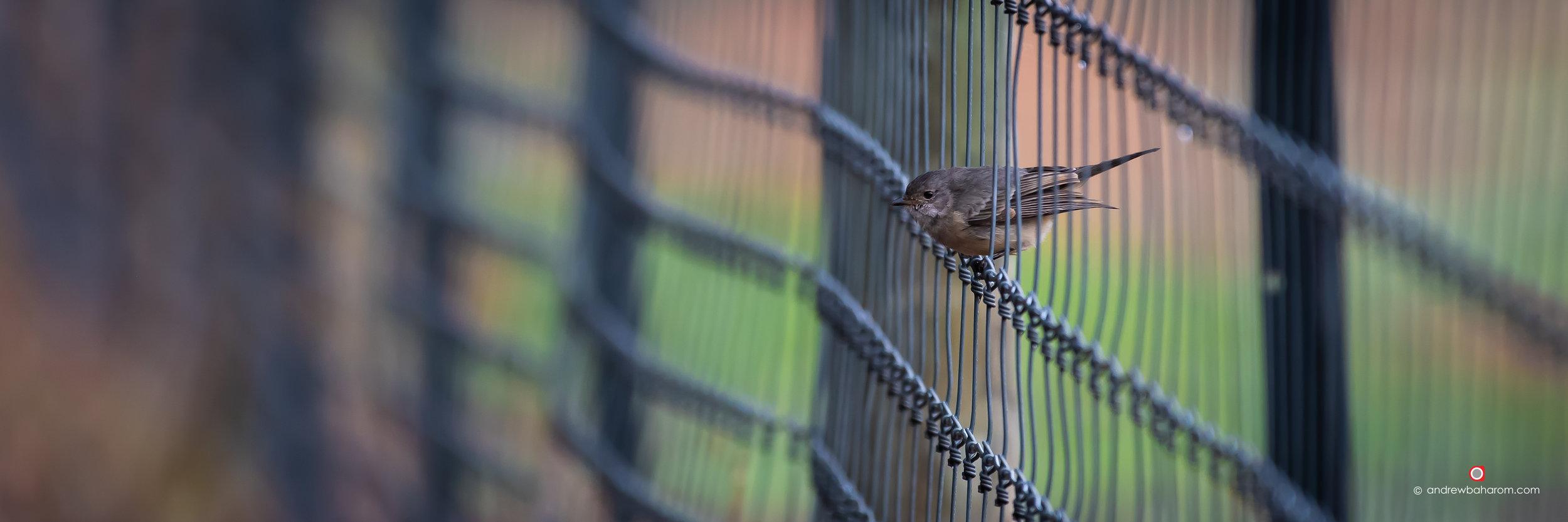 Dwellingup Bird.jpg