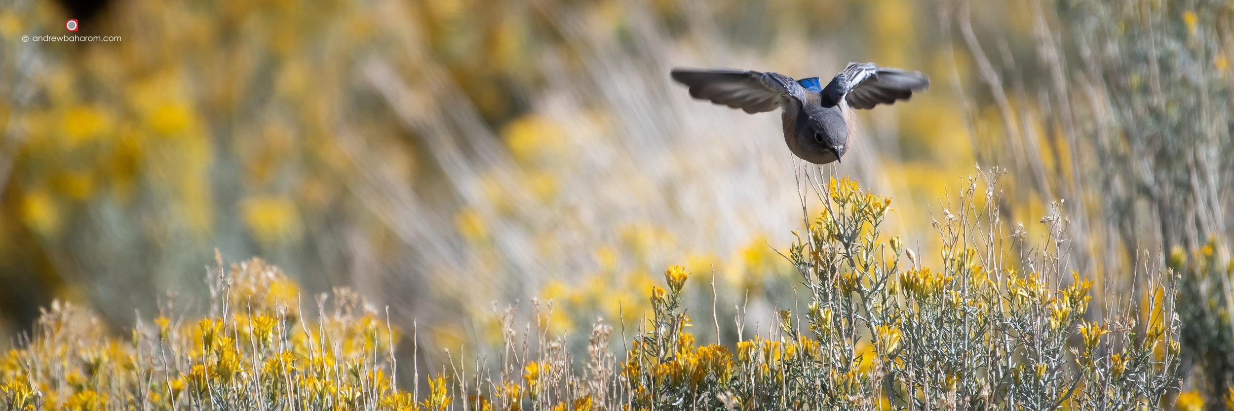 Yellow Flower Field Bird.jpg