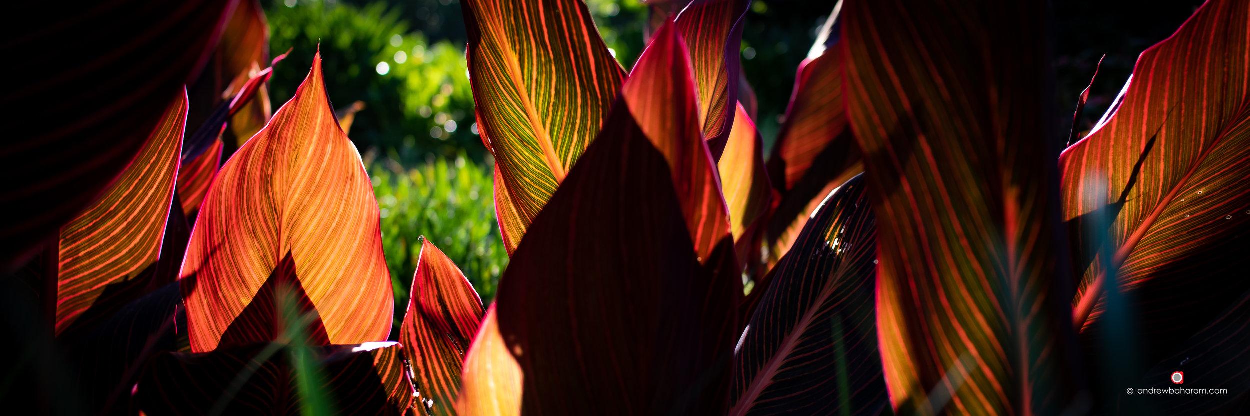 East Perth Red Leaves.jpg