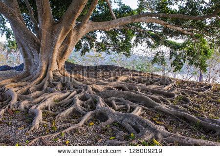 stock-photo-big-tree-root-128009219.jpg