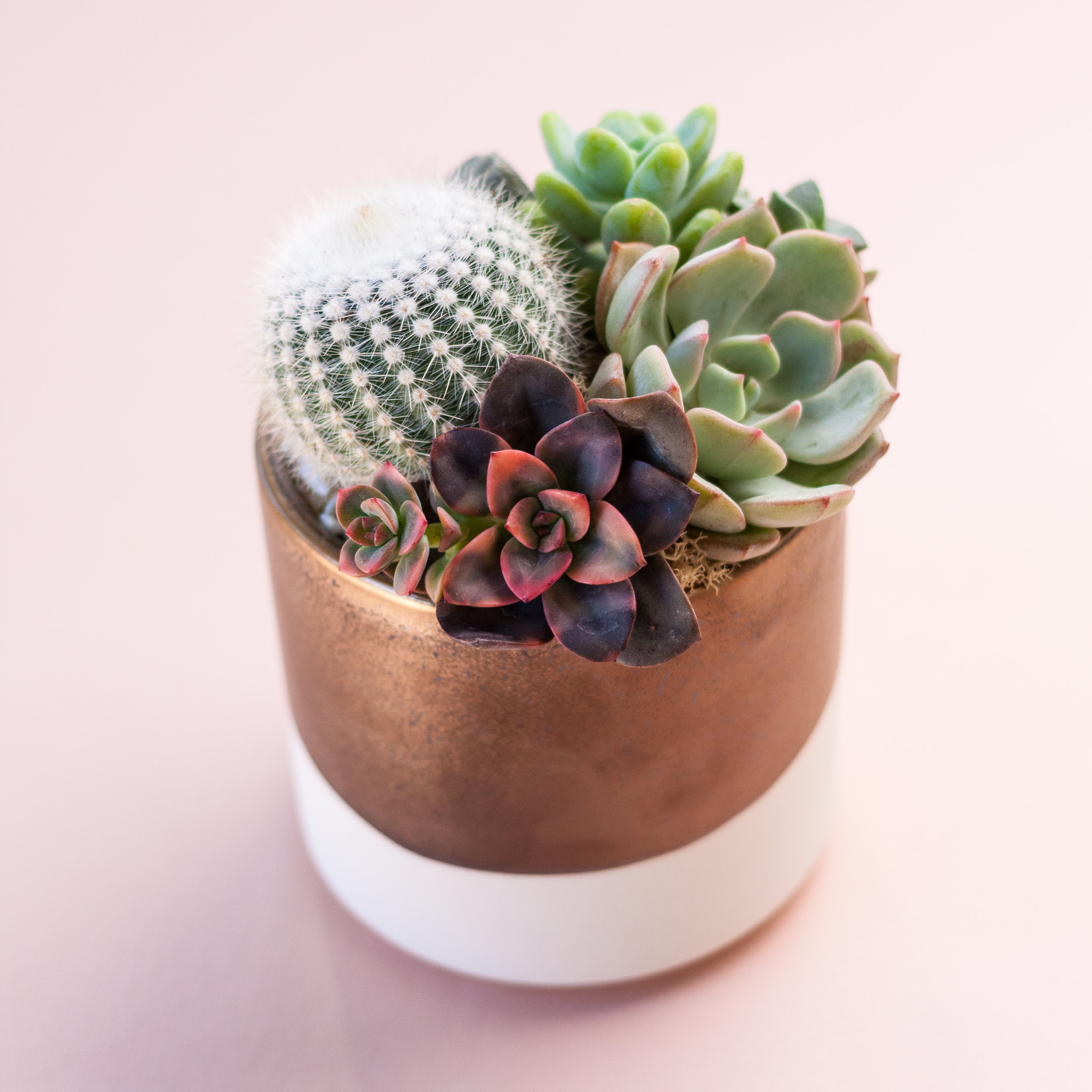 "4"" Modern Ceramic Planter $44 per person - 4"" modern ceramic planters with 4 succulentsGuests choose from a variety of beautiful planter options.photo above is just an example"