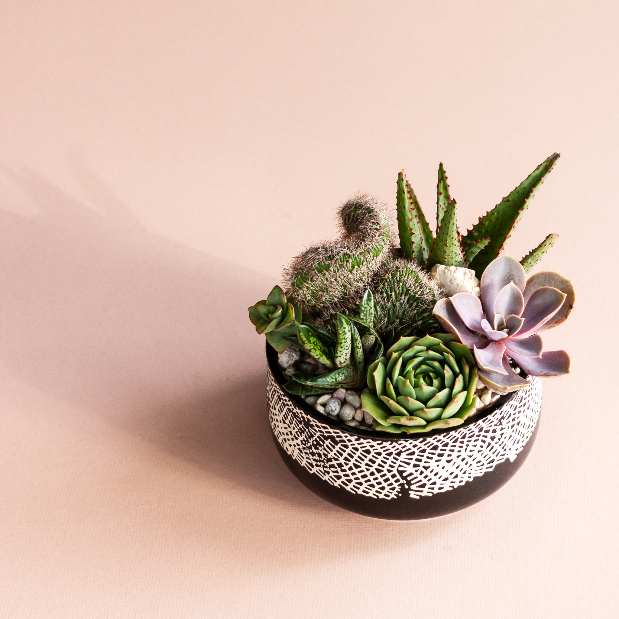 "5- 6"" Modern Ceramic Planter $55 per person - 5"" - 6"" modern ceramic planters with 5 succulents. Guests choose from a variety of beautiful planter options.photo above is just an example"