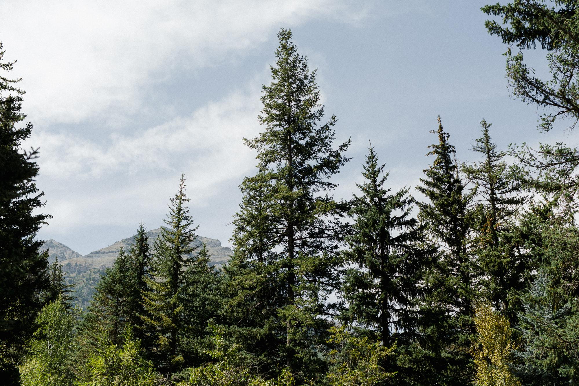 Sundance Resort Pine Trees.