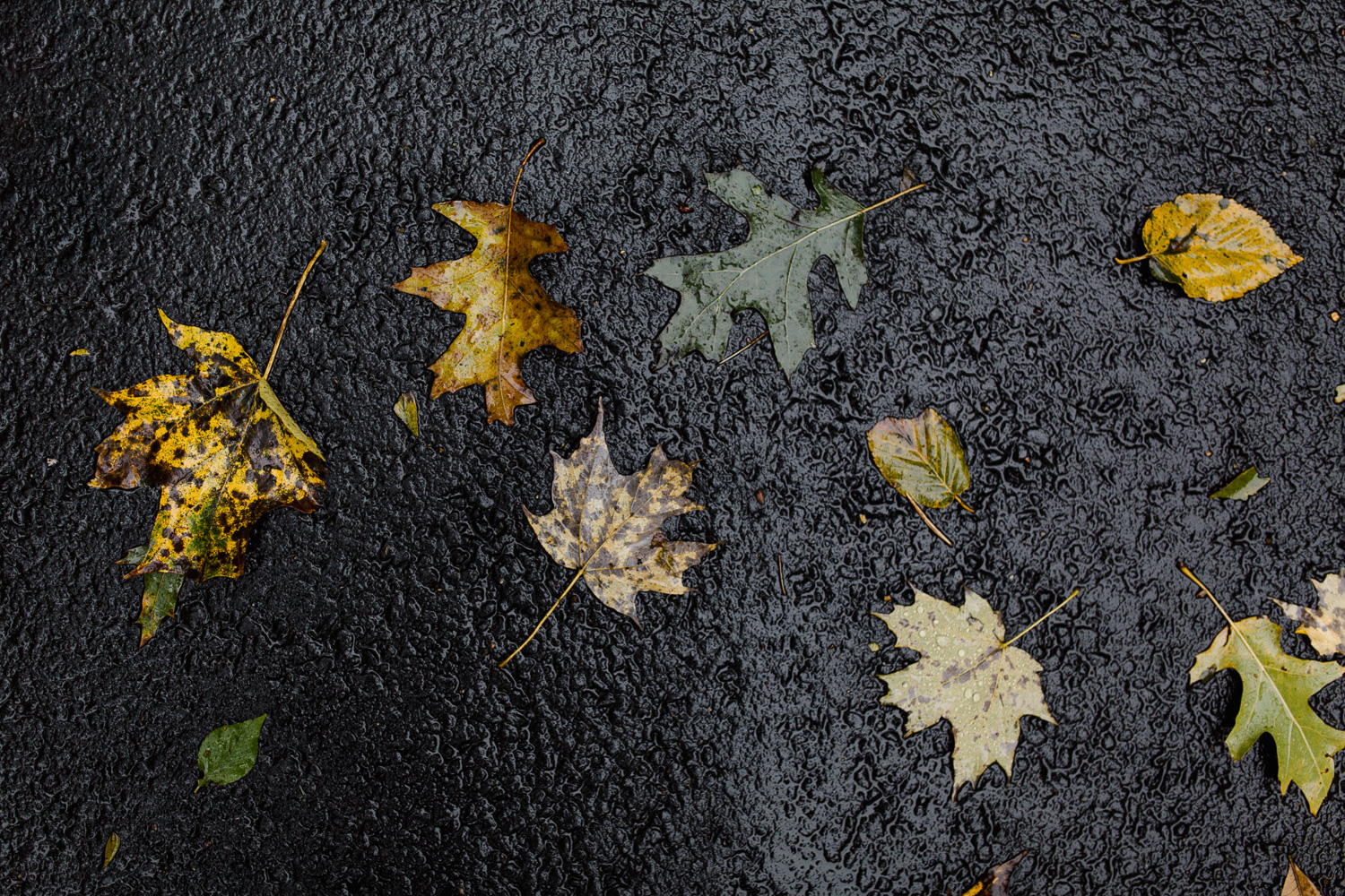 new-jersey-fall-leaves