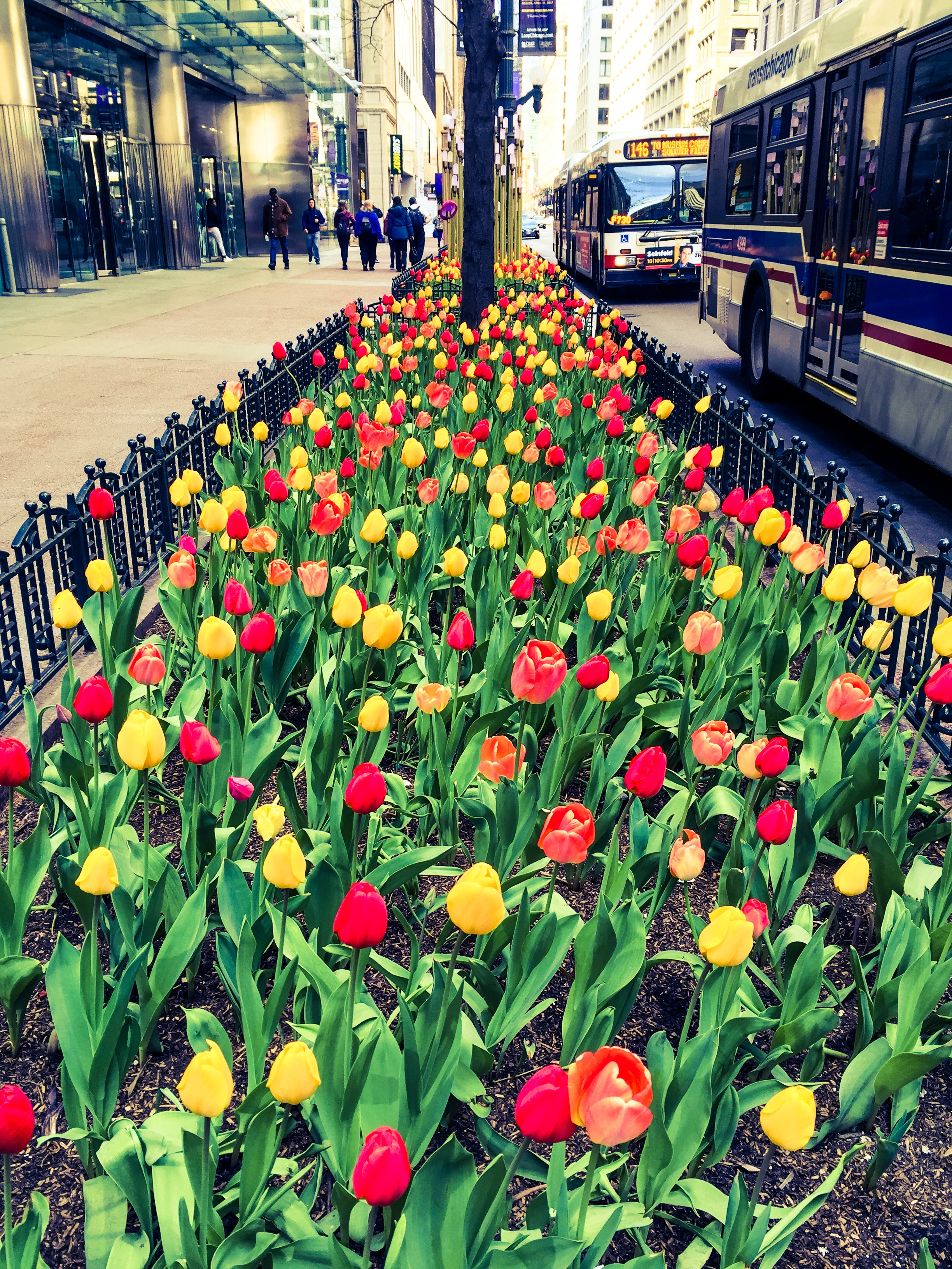 Everything's Coming Up Tulips
