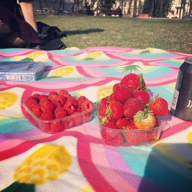 Picnic season is here #lumoa #team #summer #fun