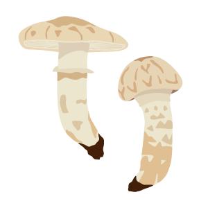 mushrooms-sq.png