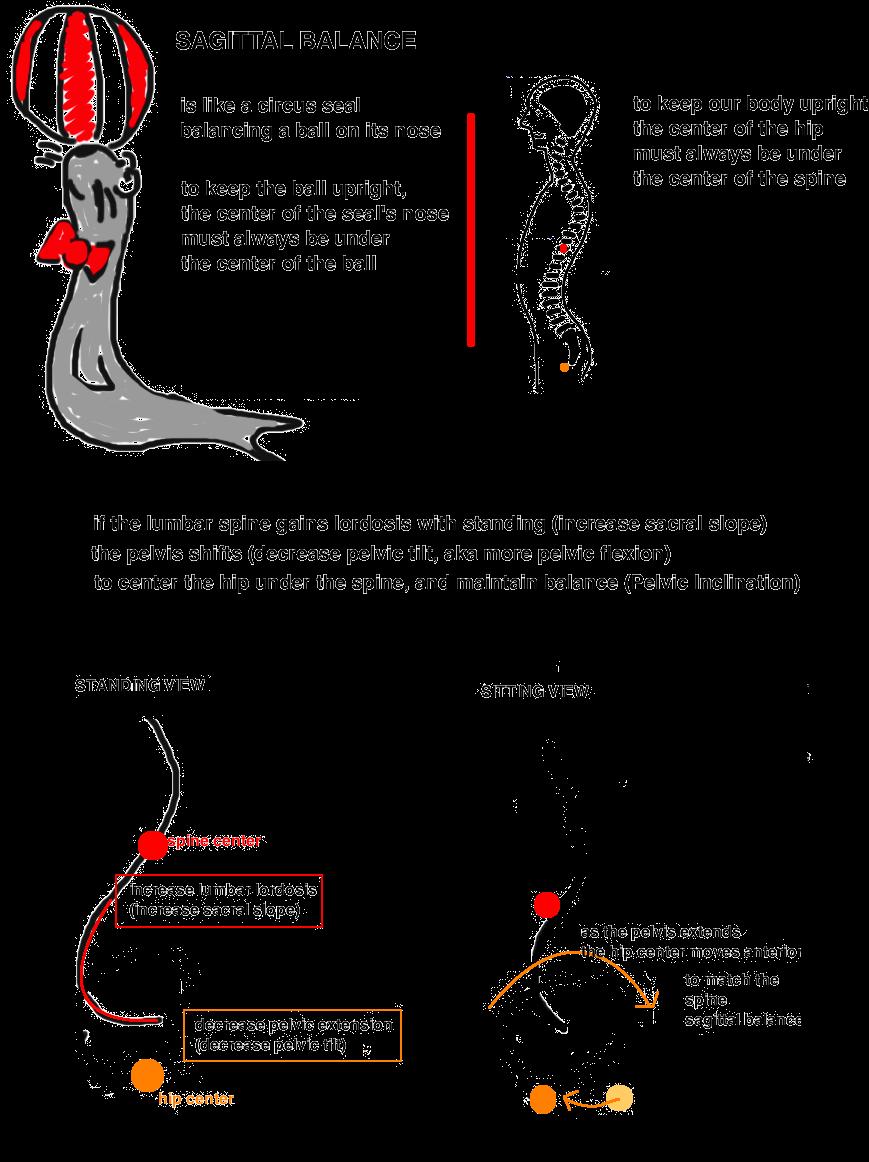 pelvic tilt sagittal balance