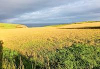 Dunowen's Fields of Gold
